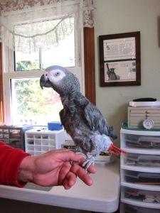 Pepper bird